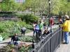 Tuinieren op Manhattan